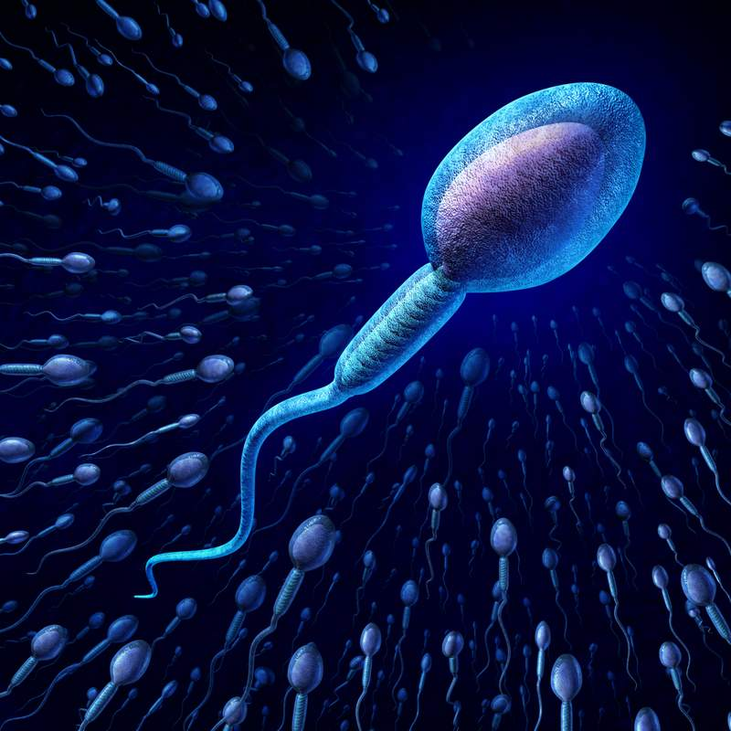 die beweglichkeit der spermien