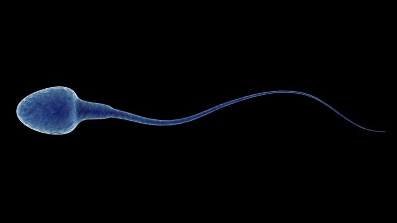 Sperm and Spermiogram