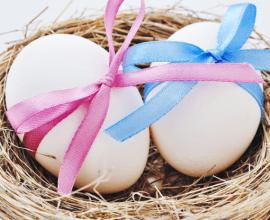Egg Donation Laws: the UK vs. the Czech Republic
